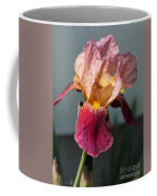 Tall Bearded Iris Named Indian Chief Coffee Mug