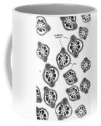 Tem Of Chinese Hamster Spermatozoa Coffee Mug