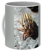 Ten Lined June Beetle Coffee Mug
