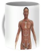 The Muscles Of The Torso Coffee Mug