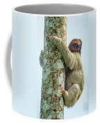 Three-toed Sloth Bradypus Tridactylus Coffee Mug