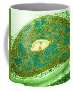 Tomato Chloroplast, Tem Coffee Mug