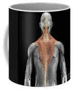 Trapezius Muscle With Skeleton Coffee Mug