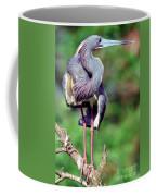 Tricolored Heron In Breeding Plumage Coffee Mug