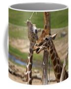 Two Reticulated Giraffes  - Giraffa Camelopardalis Coffee Mug