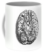 Vesalius: Brain Coffee Mug
