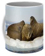 Walruses Resting On Ice Floe Coffee Mug