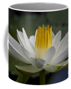 Water Lily Coffee Mug by Heiko Koehrer-Wagner