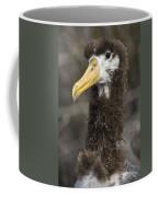 Waved Albatross Molting Juvenile Coffee Mug