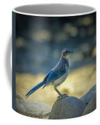 Western Scrub Jay Thief Coffee Mug