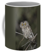 Whiskered Screech Owl Coffee Mug