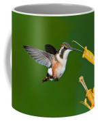 White-bellied Woodstar Coffee Mug