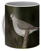 White-tipped Dove Coffee Mug
