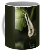 White Winged Moth Insect On A Green Tree Leaf Coffee Mug
