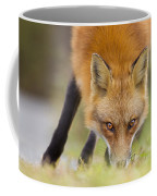 Wild Eyes Coffee Mug