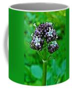 Wild Mint On Great Glacier Trail In Glacier National Park-british Columbia Coffee Mug