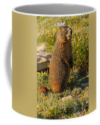 Yellow Bellied Marmot On Alert In  Rocky Mountain National Park Coffee Mug