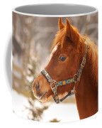 Young Horse In Winter Day Coffee Mug
