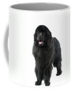 Newfoundland Dog Coffee Mug