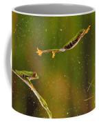 Red-eyed Tree Frog Coffee Mug