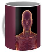 Bones Of The Head And Neck Coffee Mug