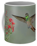 Buff-bellied Hummingbird Coffee Mug
