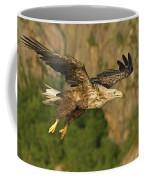 White-tailed Sea Eagle In Norway Coffee Mug