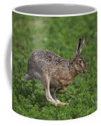 110202p214 Coffee Mug