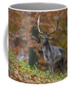 110221p136 Coffee Mug