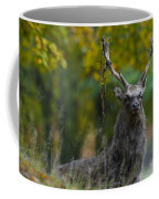 110307p070 Coffee Mug