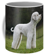 110506p121 Coffee Mug