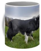 110506p164 Coffee Mug