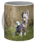 110506p174 Coffee Mug
