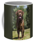 110506p183 Coffee Mug