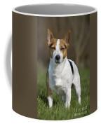 110506p196 Coffee Mug