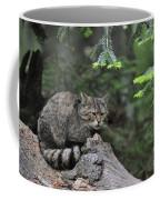 110613p008 Coffee Mug
