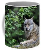 110613p025 Coffee Mug