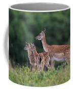 110613p158 Coffee Mug