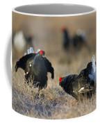 110714p174 Coffee Mug