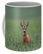 110714p319 Coffee Mug