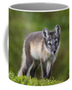 111216p021 Coffee Mug
