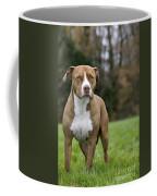 111216p246 Coffee Mug