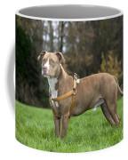 111216p248 Coffee Mug