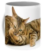 Bengal Brown Spotted Tabby Coffee Mug