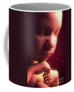 Developing Fetus Coffee Mug