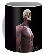 Muscles Of The Upper Body Coffee Mug