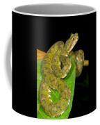 Eyelash Viper Coffee Mug