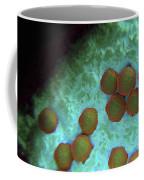 Rubella Virus Coffee Mug