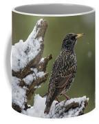 130215p296 Coffee Mug