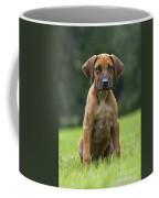 130918p305 Coffee Mug